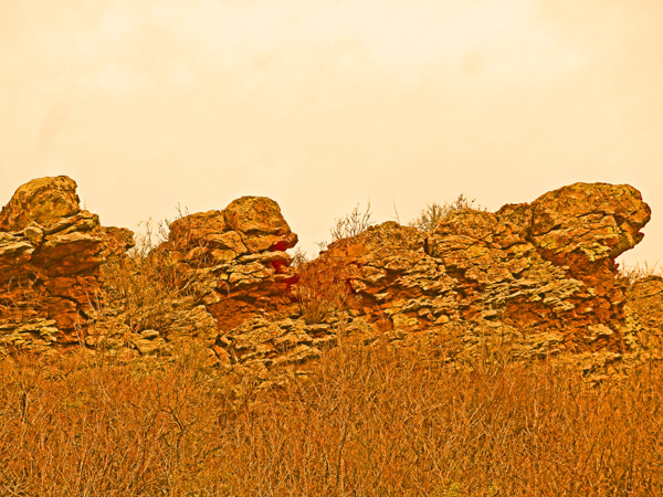 Coyote Ridge Natural Area Photo Art 2014 by TVS