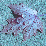 Leaf Photo Art by TVS