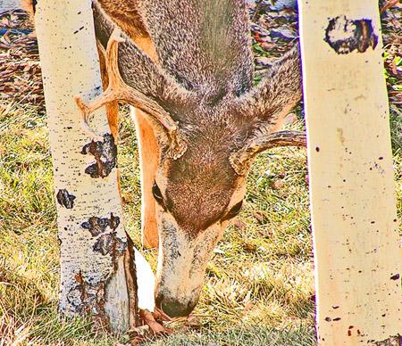 Foothills Deer Photo Art by TVS