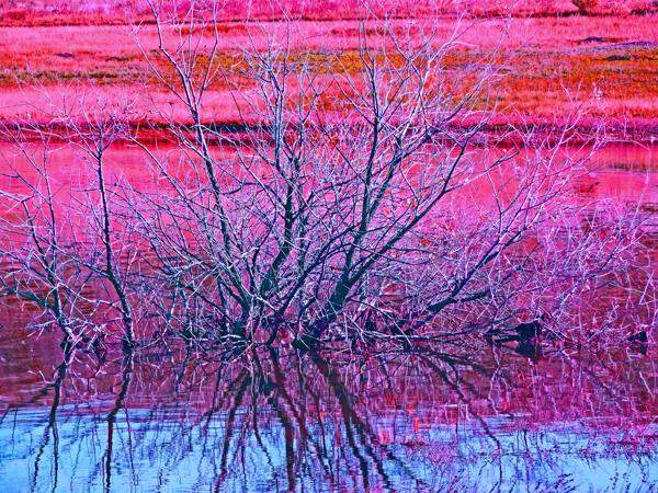Pineridge Natural Area Photo Art by TVS