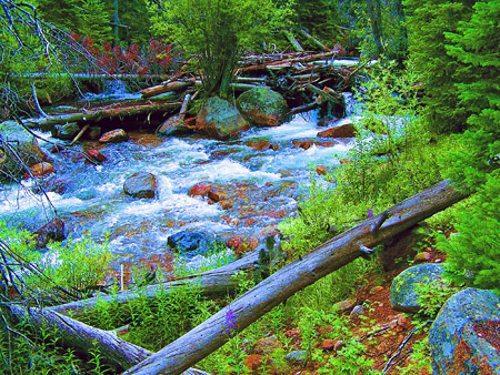 Roosevelt National Forest- South Fork of Poudre Photo Art by TVS