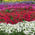 CSU Experimental Garden 2 by TVS